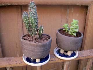 cactus-testos-refrectari-