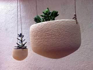 testos-cactus-refrectari